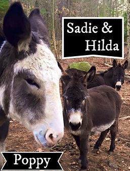 Poppy, Hilda, Sadie.jpg