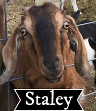 staley web.jpg