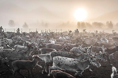Samis & reindeers 4619
