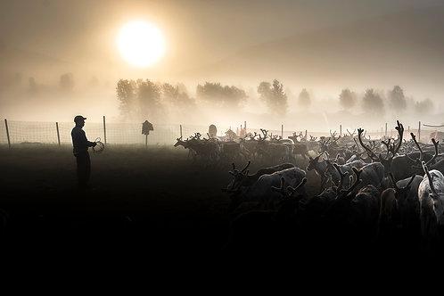 Samis & reindeers 4642