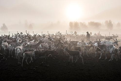 Samis & reindeers 4617