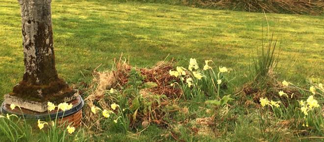 Spring at last?