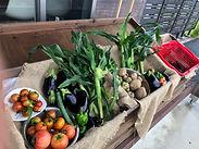 野菜販売はじめました
