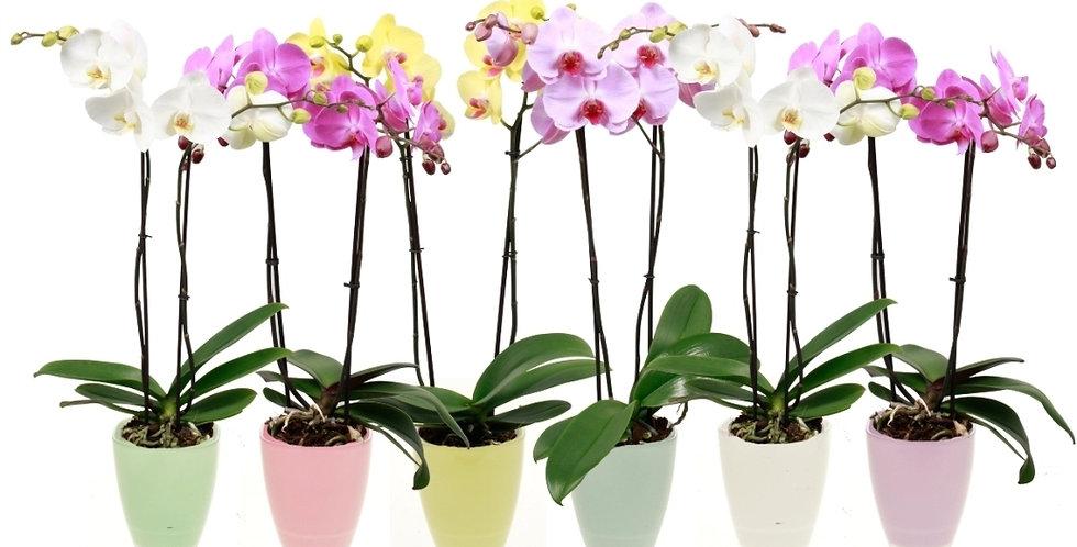 Abonnement orchidées