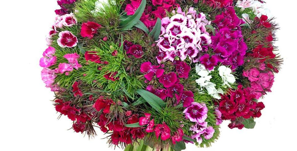Bouquet d'oeillet de poète en mix de couleurs