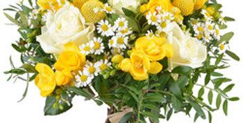 Alegra jaune et blanc
