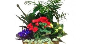 Composition de plantes intérieures