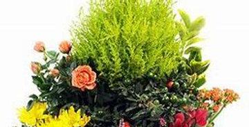 Terrine de plantes extérieur
