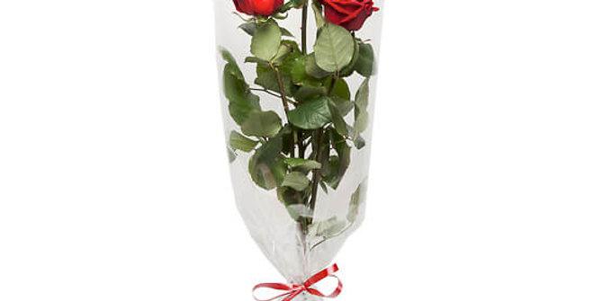 Rose rouge tige trio