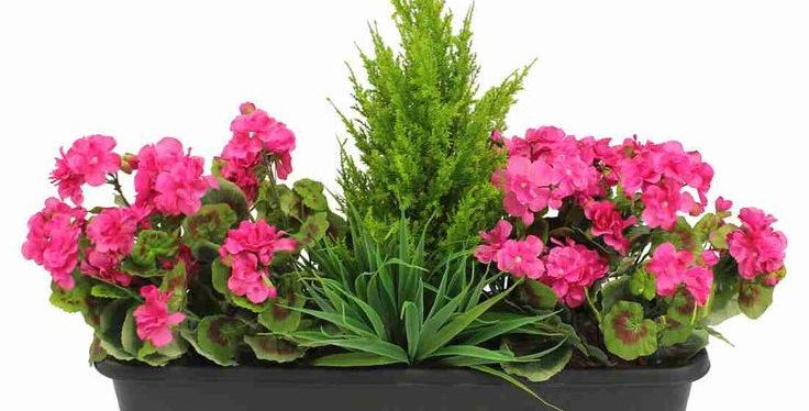 Caissette de plantes estivale