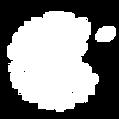 Logo-bonjourLesFleurs-blanc.png