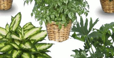 Lot surprise de 3 plantes vertes