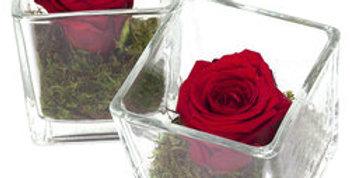 Rose éternelle stabilisée