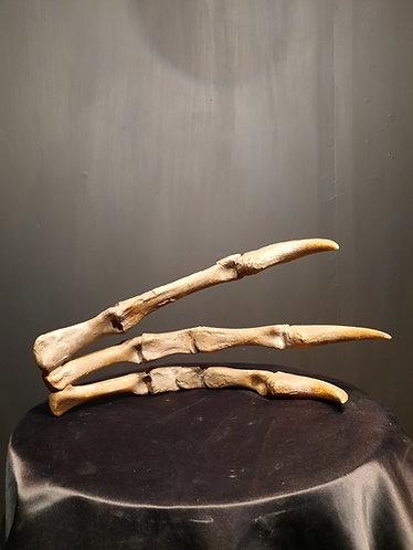 moulage de main de deinocheirus mirificus. crétacé terminal