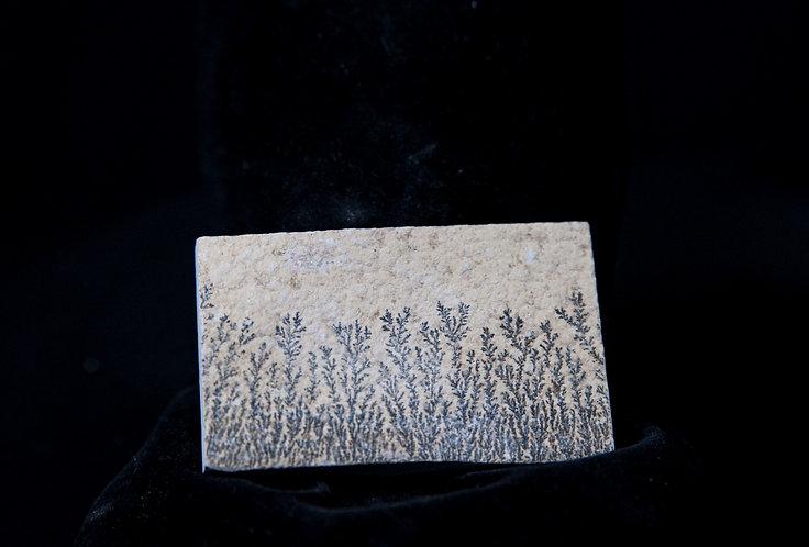 Plaque dendrite de manganèse. Pseudo fossile de Solhnofen