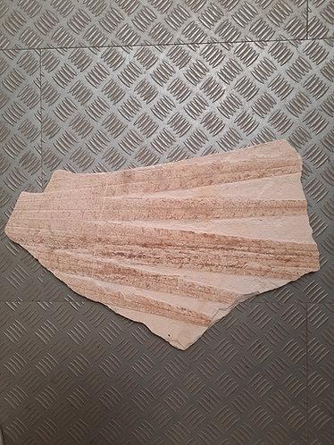 plaque feuille de palmier fossile