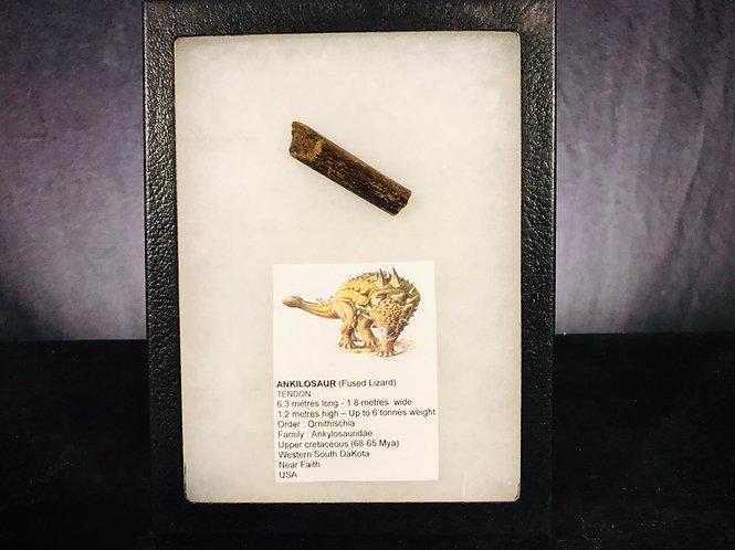 dinosaure ankylosaure, tendon, fossile crétacé supérieur, fossile dakota du Sud