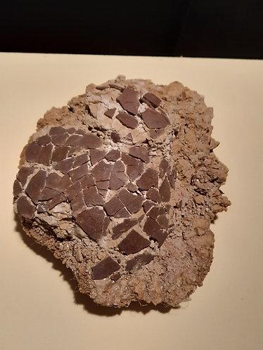 oeuf de dinosaure . Cairanoolithus. Dinosaure de France