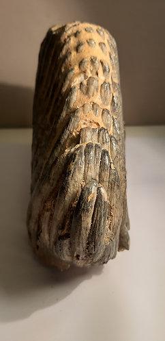 pavé dentaire de mammouth
