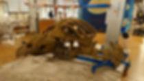 installation tortue 2.jpg