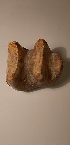 dent de deinotherium à vendre