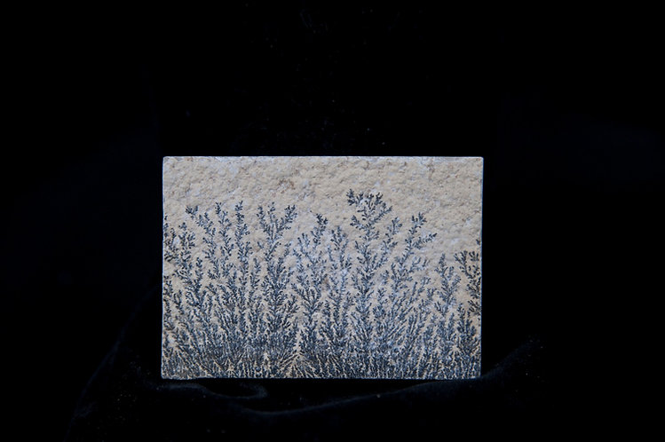 dendrite de manganèse. Pseudo fossile de Solhnofen. Pierre paysage