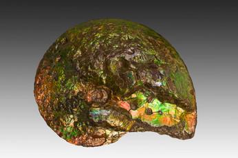 Ammonite en opale
