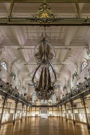 Baleine exposition Monaco