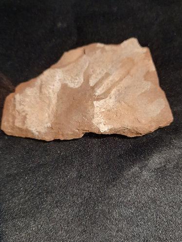 salichnium pectinatus. Trace d'amphibien, Autunien, Le Bosc