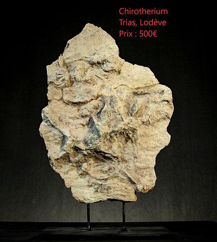 Chirotherium. Trace de pas fossile sans doute d'un ancêtre des crocodiles.  Trias  Lodève, France
