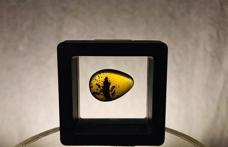 ambre avec insectes. Ambre de la Baltique. résine fossile