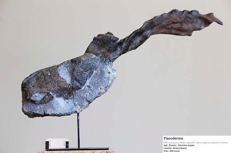 poisson fossile dévonien maroc