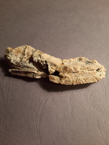 Morceau de mâchoire d'Hamadasuchus rebouli