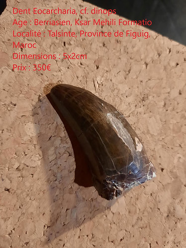 dent d'Eocarcharia maroc