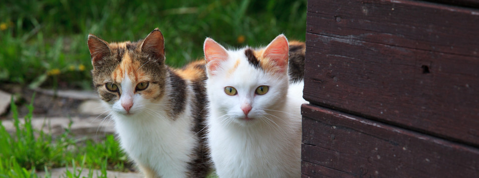 love_cats.jpg