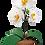 Thumbnail: Felt Orchid
