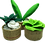 Thumbnail: Succulents kit
