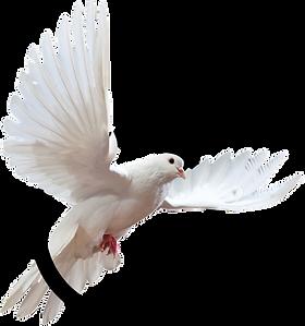 testimonial-bird.png