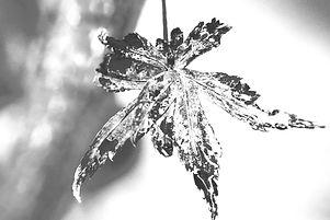 leaf-5684051_1920_edited_edited_edited_e
