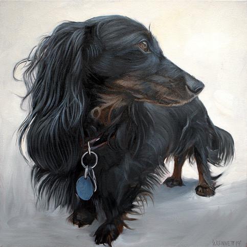 Dog Portrait Chicago