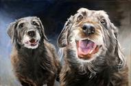 Chicago Dog Portrait