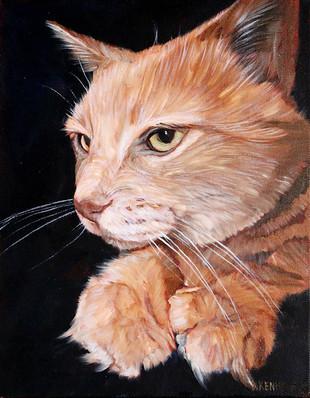 Dallas Cat Portrait