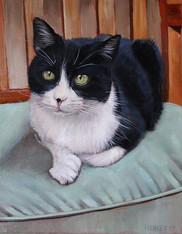 San Diego Cat Portrait