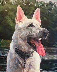Custom Dog Painting | Chicago