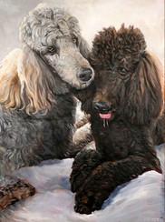BFF Pet Paintings Poodle Portrait