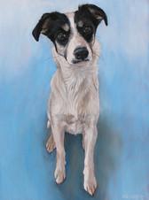 Terrier Pet Portrait Dallas