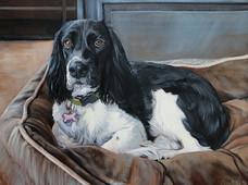 BFF Pet Paintings Austin Dog Portrait