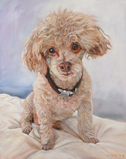 Poodle Portrait | BFF Pet Portraits