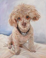 Poodle Portrait | BFF Pet Portraits