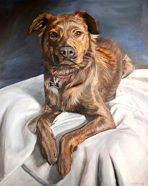 Dog Portrait Dallas